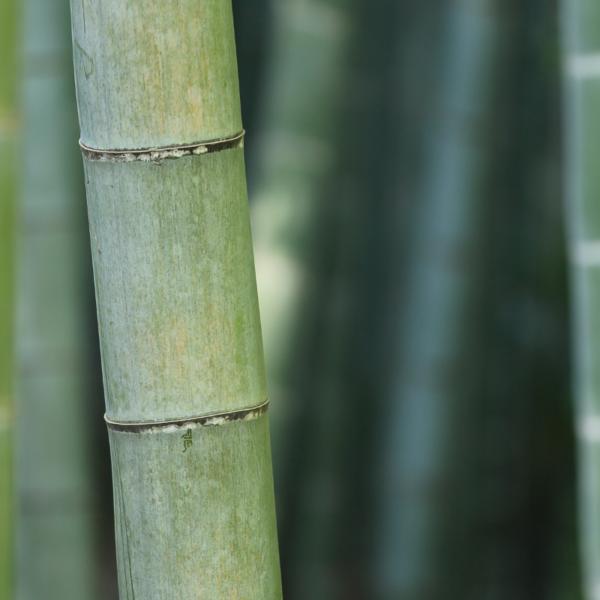15Ogaenics_Bio-Zutaten-natürliche-nahrungsergaenzung-bambus silizium