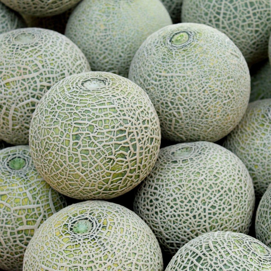 Ogaenics-bio-zutaten-natuerliche-vitamine-cantaloupe-melone(2)