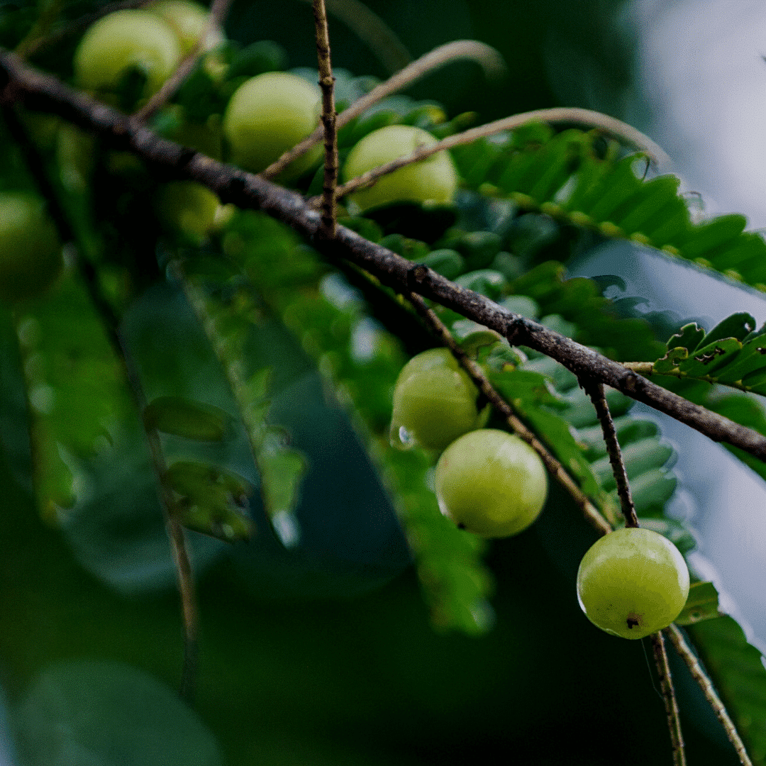 Ogaenics-bio-zutaten-natuerliche-vitamine-amla