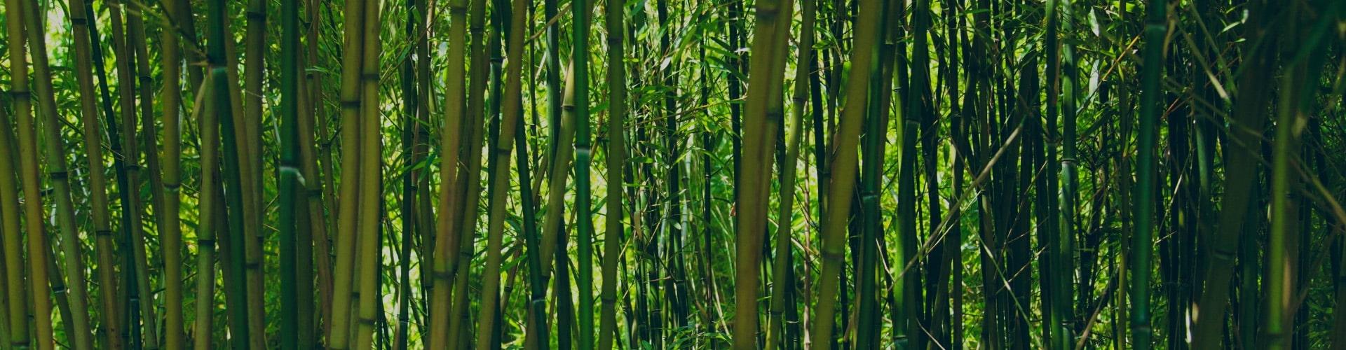 bio-bambus-in-natuerlicher-form-Zutaten_Ogaenics