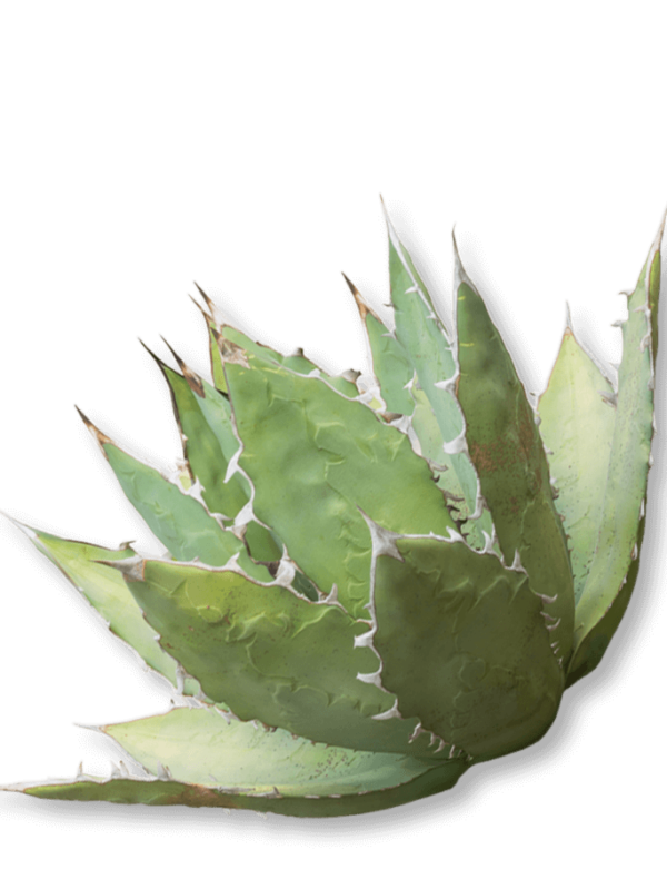 bio-agaven-inulin-ogaenics-zutat-natuerlich