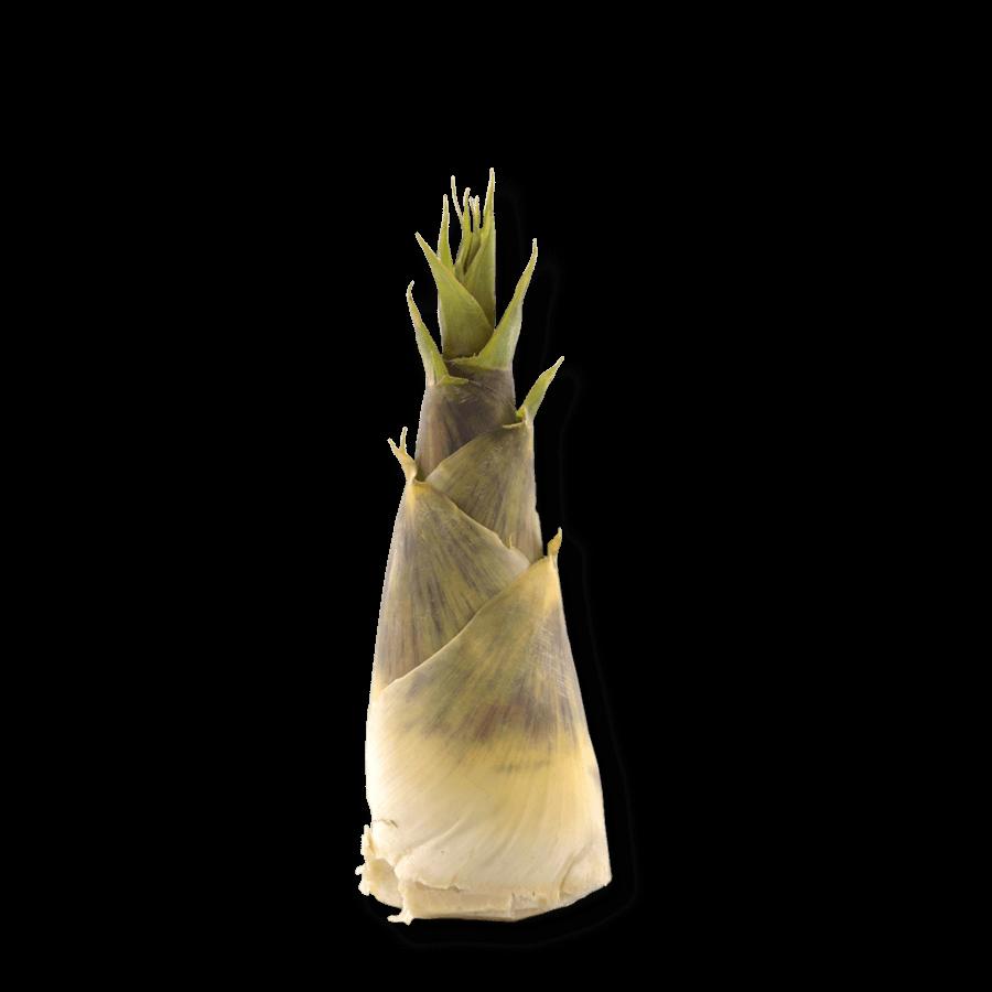 bio-bambussprossen-silicium-ogaenics-zutat-natuerlich