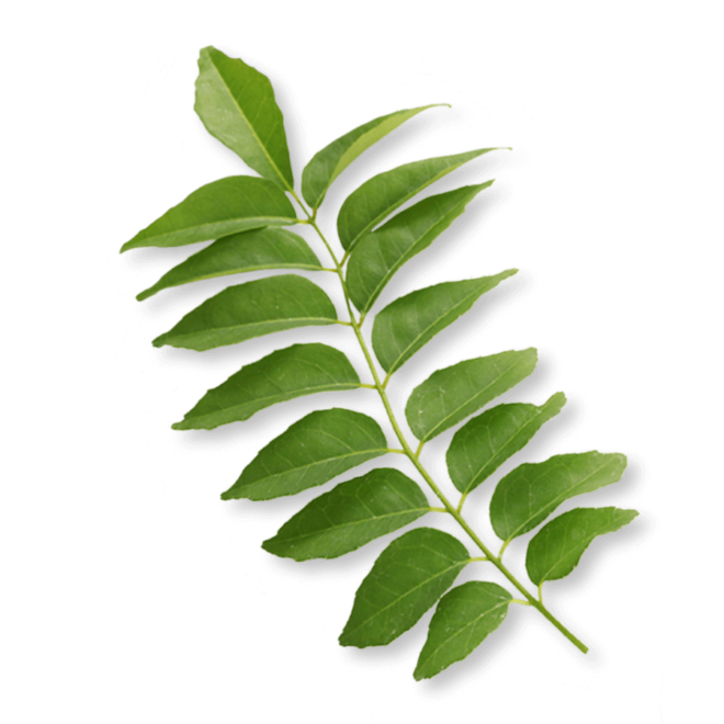 bio-curryblatt-eisen-ogaenics-zutat-natuerlich