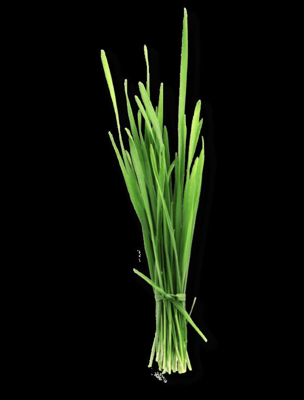 bio-gerstengras-ogaenics-zutat-natuerlich