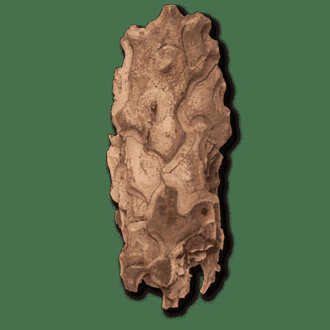 bio-kiefernrinde-opc-ogaenics-zutat-natuerlich